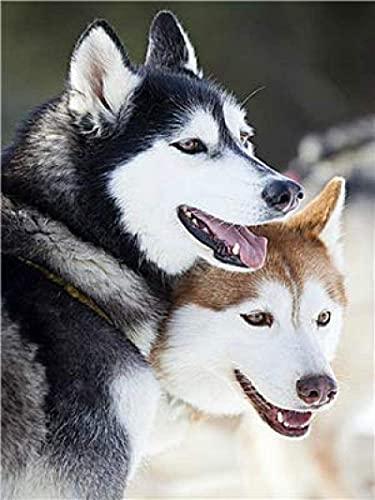 HJHJHJ 2000 para Adultos, Rompecabezas de Dos Husky Siberiano, Kit de cartón,...