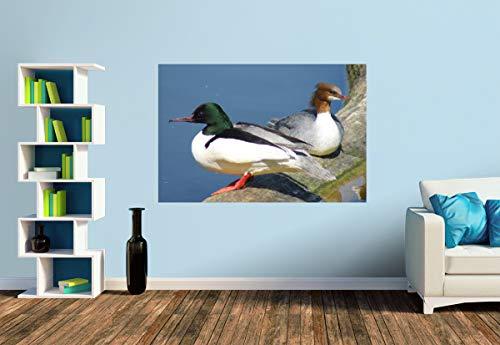Premium Foto-Tapete Gänsesäger Paar (versch. Größen) (Size S | 186 x 124 cm) Design-Tapete, Wand-Tapete, Wand-Dekoration, Photo-Tapete, Markenqualität von ERFURT