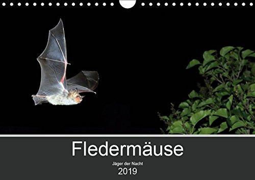 Fledermäuse - Jäger der Nacht (Wandkalender 2019 DIN A4 quer): Fotos unserer europäische Fledermäusen aus allen Jahreszeiten. (Monatskalender, 14 Seiten ) (CALVENDO Tiere)