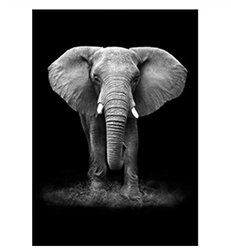 Davide Alisa Leinwand Gemälde Kunst Tiere Gemälde Elefanten Bilder Schwarz und Weiß Leinwand Poster Wandkunst für Wohnzimmer Schlafzimmer-50cm * 60cm,Rahmen