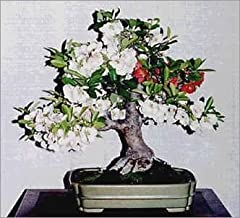 15 Seeds Chaenomeles Japonica Seeds (Flowering Quince) Bonsai