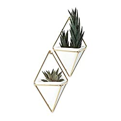 Umbra Trigg Hanging Planter vase for wall decoration