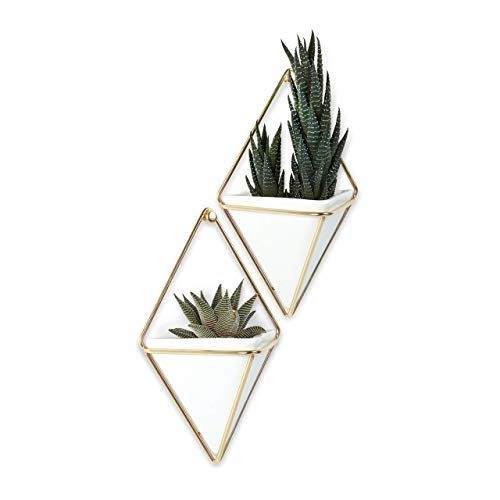 Best wall plant