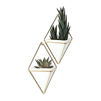 wall planters for indoor plants modern