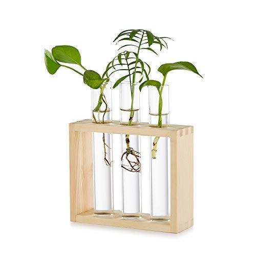 Glasseam Piantatrice da Tavolo in Vetro da Appendere Stazione di Propagazione Moderna 3 Provetta per Boccioli di Fiori Vaso in Legno Supporto per Piante Idroponiche Talee