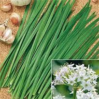 AIMADO Samenhaus- 10 Stück Schnittknoblauch Samen Würziger Geschmack Mehrjährig Bio Saatgut,Flache Triebe Ideal für den Kübel