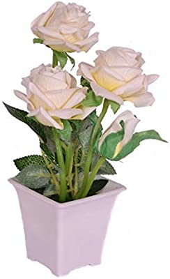 PlantaZee Gorgeous Bright colored for Beautiyful Home Decoration Pink Rose Live Plant