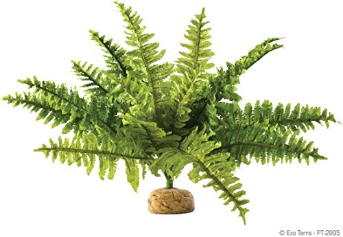 Exo Terra - Terrarium decoratie Rainforest Plant - Boston Fern/Varen - M - 9x5x29cm