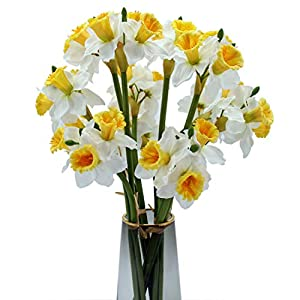 22Inch Artificial Daffodil Flowers Faux Daffodil Flowers for Home Decoration (12Pcs) (White)