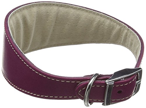 BBD Pet prodotti Whippet Deluxe collare, Boysenberry