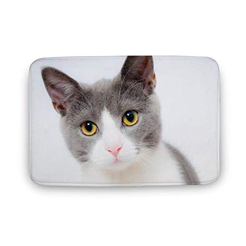 ART VVIES Dekokissen Hüllen Design Drucke Abdeckungen Reißverschluss für Hauptdekorationen Katze Haustier Tier Hauspelz Portrait Feline 40x60x0.8cm