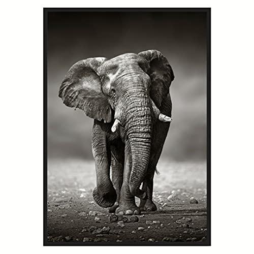 LAMINFY Cuadro decoración Elefante | Lámina Decorativa 50x70 |Cuadros decoración | Lámina Decorativa para dormitorios Modernos | Cuadro de Elefante 50x70 sin Marco.