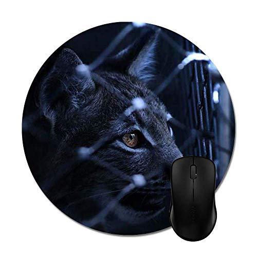 Memory Shop Gato Negro en la Cerca de Alambre del ciclón Al