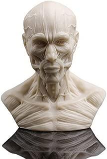 Artist Model Decor Human Bust Sculpture Statue Resin Sketch Draw Plaster Cast
