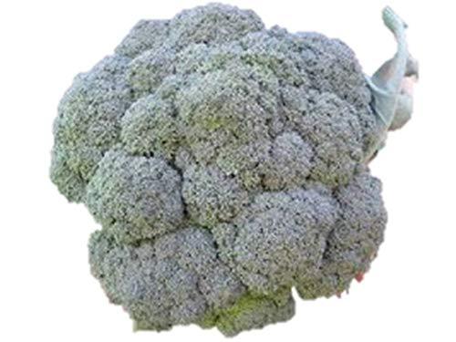 重さ約1.6KG 40cmの超巨大ブロッコリー 種 120粒 F1品種