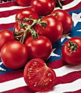 Fourth of July Hybrid Tomato 25 Seeds - Early Variety!