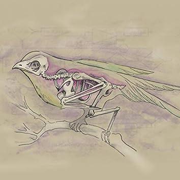 Ghost Birdie