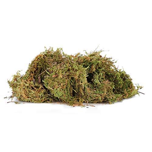 Weikeya Respirable Reptil Musgo Estera, Plantas Vivir Agua Dulce con Musgo(Verde)