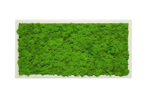 Islandmoosbild Moosbild Islandmoos Rentiermoos Moos Moosbilder Wandbild Wanddeko Wandbilder mit Island Moss Mooswand Pflanzenbild Bilder Deko mit Holzrahmen Bilderrahmen (100 x 35 cm, Weiss)