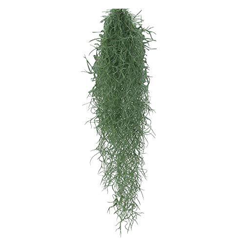 Tillandsia usneoides | Spanish Moss | Air Plant | Hanging Baskets | Height 50-60 cm