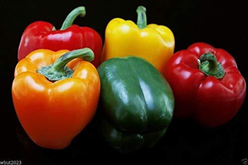 GEOPONICS Dolce Peperone dolce, organico, 50 semi Misto Rosso, giallo, arancione Excelent in container