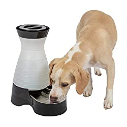 10 Best Cat Water Fountains Reviews and Guide 2019