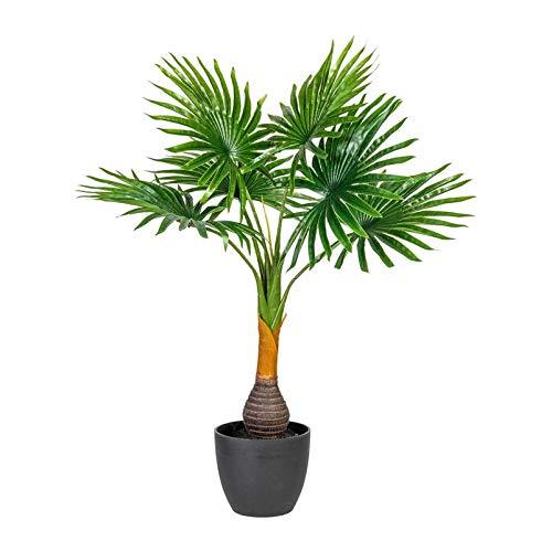 Pflanzen Kölle Fächerpalme, grün, ca. 70 cm, im schwarzen Kunststofftopf 14 x 12 cm