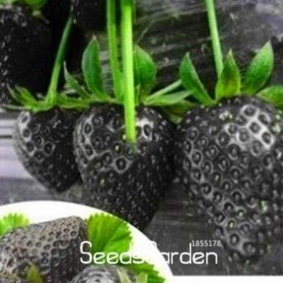 Verlust-Förderung!100 Samen/Pack Obst Samen Schwarze Erdbeere Samen Bonsai Pflanzen Für Zuhause & Amp; Gartentopf Gartenerdbeeren, 2Kklcf