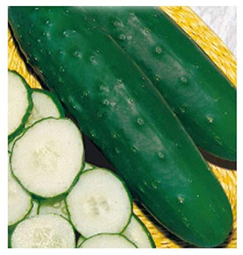 200 c. halflange komkommerzaden marketmore 76 - cucumis sativus in originele verpakking gemaakt in italië - halflange komkommers