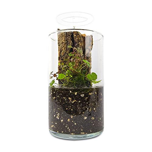 Generic PlantMyTank Wabi Kusa Baranek Décoration de table pour aquarium Boule de mousse Verre Plantes aquatiques Florarium Lampe