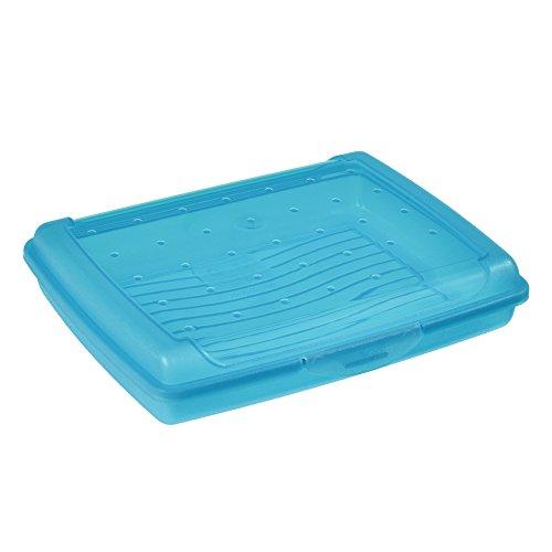 keeeper Frischhaltedose mit Klickverschluss, 17 x 13 x 3,5 cm, 500 ml, Luca Mini, Blau