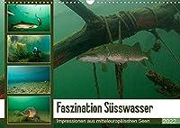 Faszination Suesswasser (Wandkalender 2022 DIN A3 quer): Tauchen im See (Monatskalender, 14 Seiten )