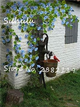 VISTARIC Granadilla 20pcs / bag Passi Samen Maracuja (Passionsblume) Bonsai Blumensamen Neue Pflanzen Obstbaum-Samen für Garten Mehrfarbiges