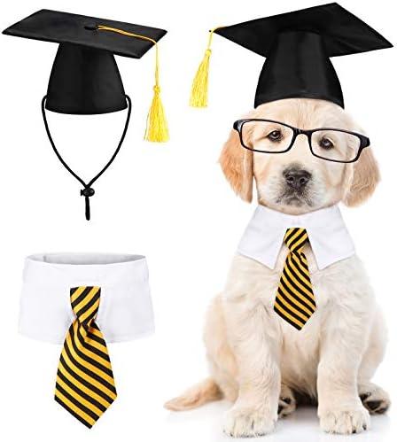Dog graduation outfit