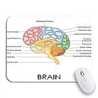 NINEHASA 可愛いマウスパッド 人間の脳の解剖学の図脳医療神経科学ノンスリップゴムバッキングノートブック用マウスパッドコンピューターマウスマット