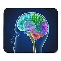 """マウスパッドホワイトアッシュ脳と骨格人体解剖学医学的に正確なノートブック、デスクトップコンピューター用マウスパッドマット9.5"""" X 7.9""""オフィス用品"""