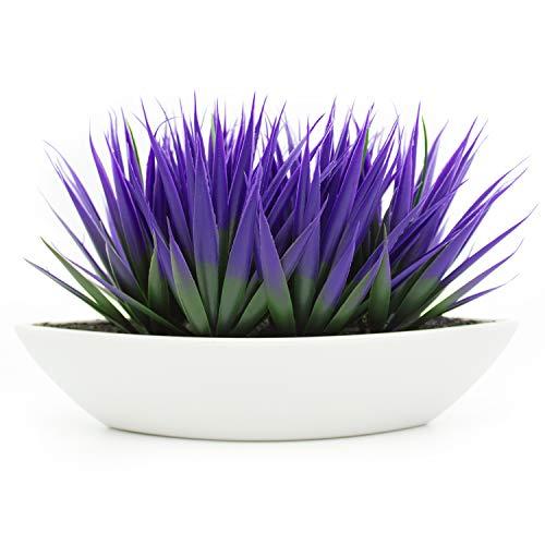 KELZIA Plantas
