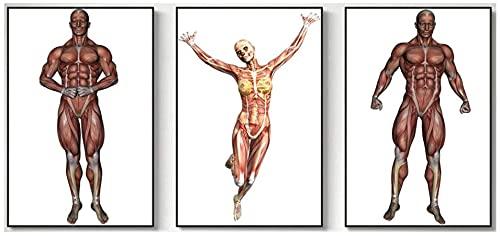 Lesign Muskelkarte Bild Menschlicher KöRper Poster Klinik Leinwanddruck Bild Arztpraxis Wand Bilder Bild Wohnzimmer Wohnkultur 40x60cmx3 Kein Rahmen