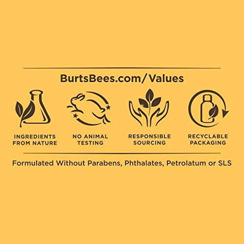 41I6l8C OUL - Burt's Bees Renewal Firming Moisturizing Cream with Bakuchiol Natural Retinol Alternative – 1.8 ounces (Packaging May Vary)