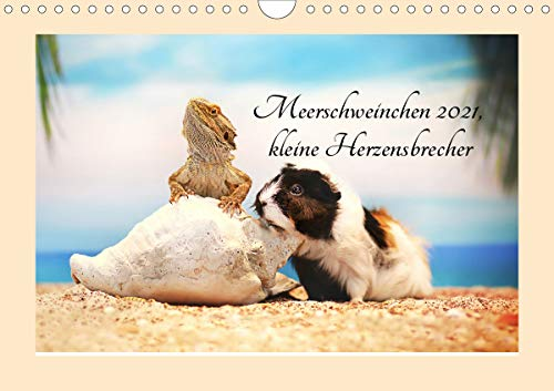 Meerschweinchen 2021, kleine Herzensbrecher (Wandkalender 2021 DIN A4 quer)