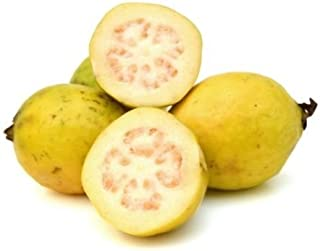 Best strawberry guava tree for sale Reviews