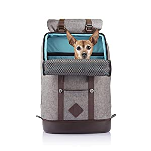 Kurgo Dog Carrier Backpack for Small Dogs & Cats, G-Train Pet Backpack Carrier, Airline Approved, Cat Backpack, Small Dog Backpack for Hiking & Travel, Lightweight, Waterproof Bottom