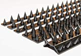 the Cactus Fence Wall Spikes: Pack of 50 (22.5M to 67.5M) – BLACK