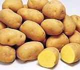 インカのめざめ 北海道産 【 秀品 】 M/L/2Lサイズ 5kg以上 正規品 人気 おすすめ じゃがいも 芋