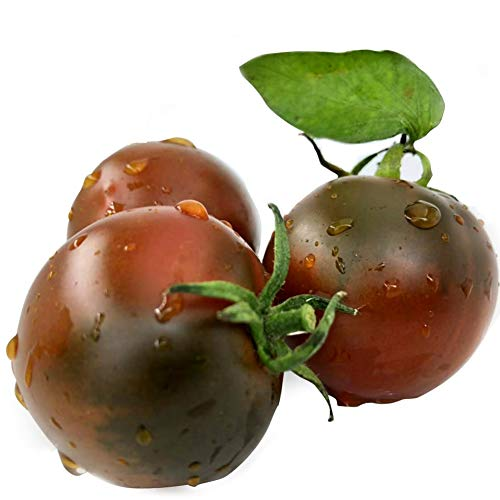 Lila Tomatensamen 30+ Solanum Lycopersicum Beefsteak Schokolade Kirsche Tomate Bio Premium Gemüse Pflanzen Premium Samen zum Pflanzen Garten im Freien
