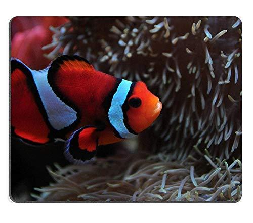 Mauspad Gaming Mauspad Naturkautschukmausmatte Seattle Aquarium Tropical Pacific Clownfish Set aus Naturkautschukmaterial M0A14064