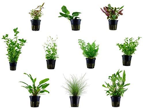 Tropica Einsteiger Maxi Set mit 10 Topf Pflanzen Aquariumpflanzenset Nr.36 Wasserpflanzen Aquarium Aquariumpflanzen