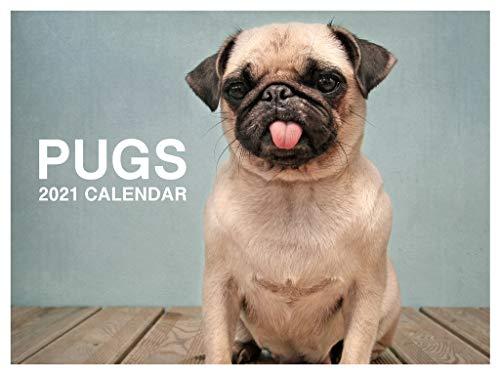 Pugs Cute Funny Puppies Dog Breed 2021 Wall Calendar 12 Month Monthly Full Color Thick Paper Pages Folded Ready to Hang 18x12 inch