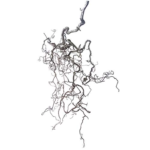 Korkenzieherast (ca. 60-80 cm lang; 40 cm breit): 1 echter AST zur Dekoration - frischer Korkenzieherast - Frühlingsdeko-AST - Wanddeko