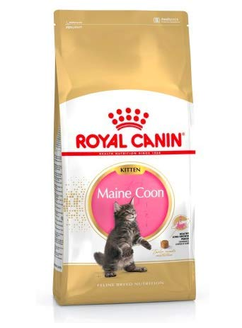 Maltbys' Stores 1904 Limited 4kg Royal Canin MAINE COON KITTEN Breed Nutrition Cat Food
